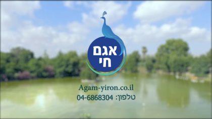 AGAM YIRON